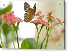 Acrylic Print featuring the photograph Milkweed Butterfly by MaryJane Armstrong