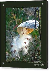Milkweed-i Acrylic Print