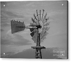 Milling Around Acrylic Print by Joe Jake Pratt