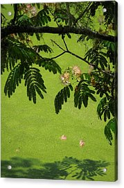 Mimosa Over Swamp Acrylic Print by Peg Toliver