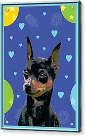 Minature Pinscher Acrylic Print by One Rude Dawg Orcutt