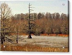Mingo Swamp 1 Acrylic Print by Marty Koch