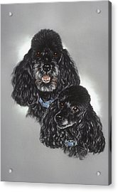 Miniature Poodles Acrylic Print by Patricia Ivy