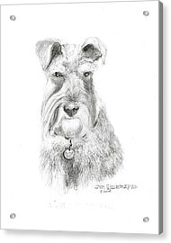 Acrylic Print featuring the drawing Miniature Schnauzer by Jim Hubbard