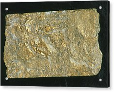 Mining Drill Core Sample With Gold Content Acrylic Print by Kaj R. Svensson