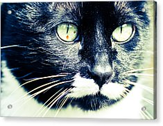 Acrylic Print featuring the photograph Minnie by Ronda Broatch