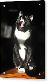 Acrylic Print featuring the photograph Minnie Singing by Ronda Broatch