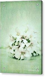 Mint Green Acrylic Print by Priska Wettstein