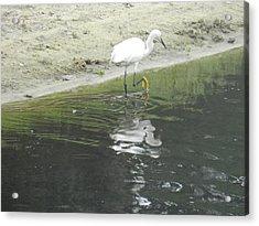 Mirror Image Acrylic Print by Debra Webb