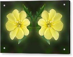 Mirrored Missoruri Primrose Acrylic Print by Linda Phelps