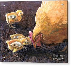 Miss Peck With Chicks Acrylic Print