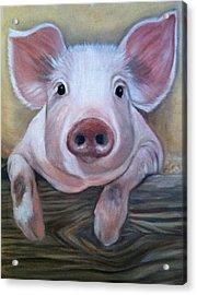 Miss Piggy Acrylic Print by Stephanie L Carr