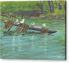 Mississippi River Gulls Acrylic Print by Nicole Grattan