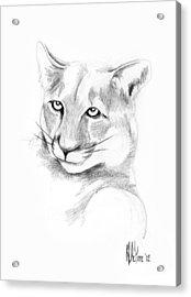 Missouri Mountain Lion  Acrylic Print by Kip DeVore