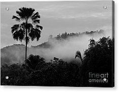Mist Od Dawn.  Acrylic Print by Gary Bridger