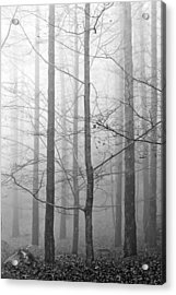 Mistery In The Forrest Acrylic Print by Filomena Francisco