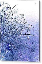 Misty Blue Acrylic Print by Will Borden