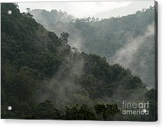 Acrylic Print featuring the photograph Misty Cloud Forest Matagalpa Nicaragua by John  Mitchell