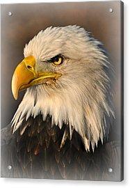 Misty Eagle Acrylic Print by Marty Koch