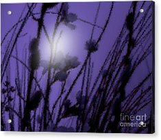Acrylic Print featuring the photograph Misty Moonlight Marsh by Roxy Riou