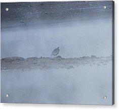 Misty Morning At Norris Lake Acrylic Print