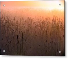 Acrylic Print featuring the photograph Misty Sunrise by I'ina Van Lawick