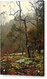 Misty Tree Acrylic Print by Marty Koch
