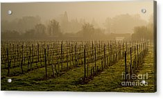 Misty Vines Acrylic Print by Urban Shooters