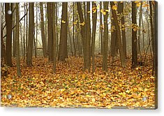 Misty Wood Acrylic Print by Cathy Kovarik