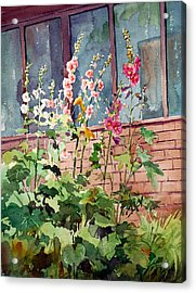 Mixed Hollyhock Acrylic Print by Peter Sit
