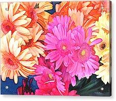 Mixed Pink And Yellow Gerber Daisies Acrylic Print