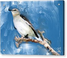 Mocking Bird In Blue Acrylic Print