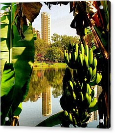 Moldura De Banana #lagoigapó #igapó Acrylic Print