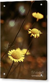 Momentum 03a Acrylic Print by Variance Collections