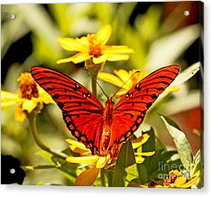 Acrylic Print featuring the photograph Monarch Butterfly  by Luana K Perez