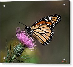Acrylic Print featuring the photograph Monarch Butterfly On Thistle 13a by Gerry Gantt