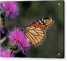 Acrylic Print featuring the photograph Monarch On Thistle 13f by Gerry Gantt