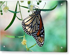 Acrylic Print featuring the photograph Monarch by Tam Ryan