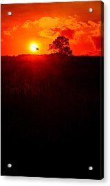 Monatch To The Sun Acrylic Print by Emily Stauring