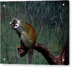 Acrylic Print featuring the photograph Monkey by Maria Urso