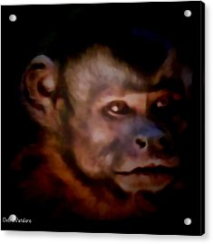 Monkey See Acrylic Print by Debra     Vatalaro