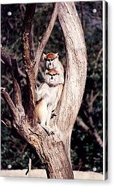 Acrylic Print featuring the photograph Monkeys In The Tree by Denise Moore
