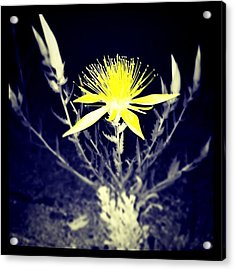 Mono Lake Flower Acrylic Print