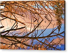 Montana Peace Pond IIi Acrylic Print by William Kelvie