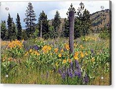 Montana Wildflowers Acrylic Print by Athena Mckinzie