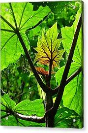Monteverde Cloud Forest Costa Rica Fine Art Print Acrylic Print by Ian Stevenson