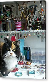 Moo Shu Cat On My Desk Acrylic Print by Kristi L Randall