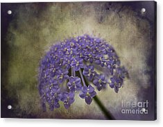 Acrylic Print featuring the photograph Moody Blue by Clare Bambers