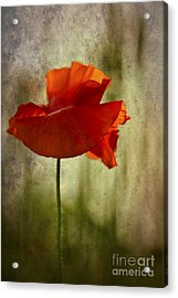 Acrylic Print featuring the photograph Moody Poppy. by Clare Bambers - Bambers Images