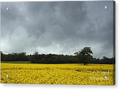 Moody Rapeseed Field Acrylic Print by Urban Shooters